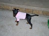 RoseSweater