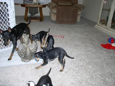 dogsPups