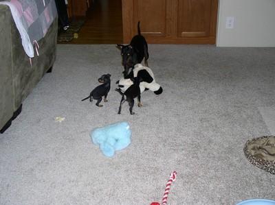 dogsPups2