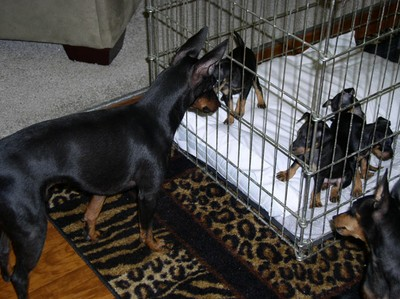 dogsPups4