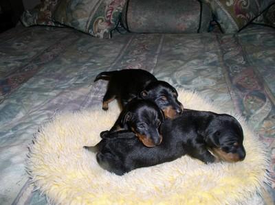 Pups9